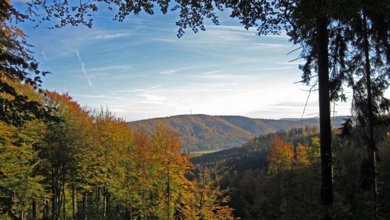 Die Zeit läuft – Ihr helft dem Wald – wir helfen Euch!